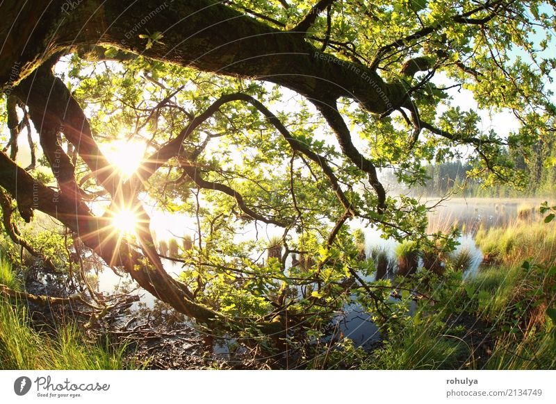 goldene Sonnenstrahlen durch Eichenäste und -blätter Natur Sommer grün Baum Landschaft Blatt Wald Frühling See hell wild Nebel Aussicht Schönes Wetter