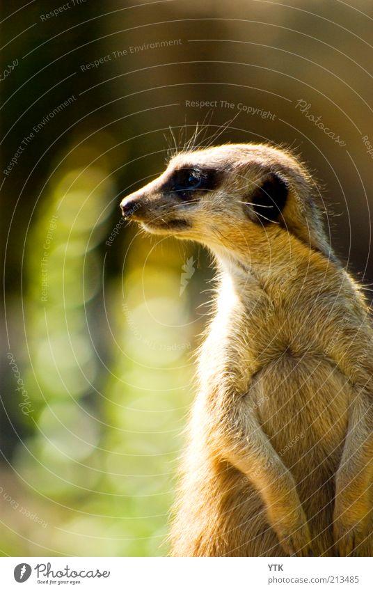 How are YOU doing? Natur schön Sommer Tier Umwelt Tiergesicht Fell Zoo Neugier entdecken niedlich Kontrolle Wachsamkeit Schönes Wetter Interesse frech