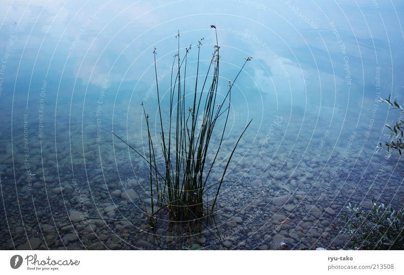 blau so blau Natur Wasser Pflanze Sommer ruhig kalt See Landschaft Küste Sträucher rein Vergänglichkeit deutlich Kies