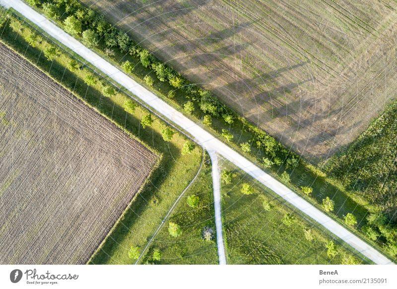 Allee mit Bäumen zwischen Feldern aus der Luft Natur Pflanze Baum Landschaft Straße Umwelt Wiese Wege & Pfade Gras Design Park Wachstum Ordnung Perspektive