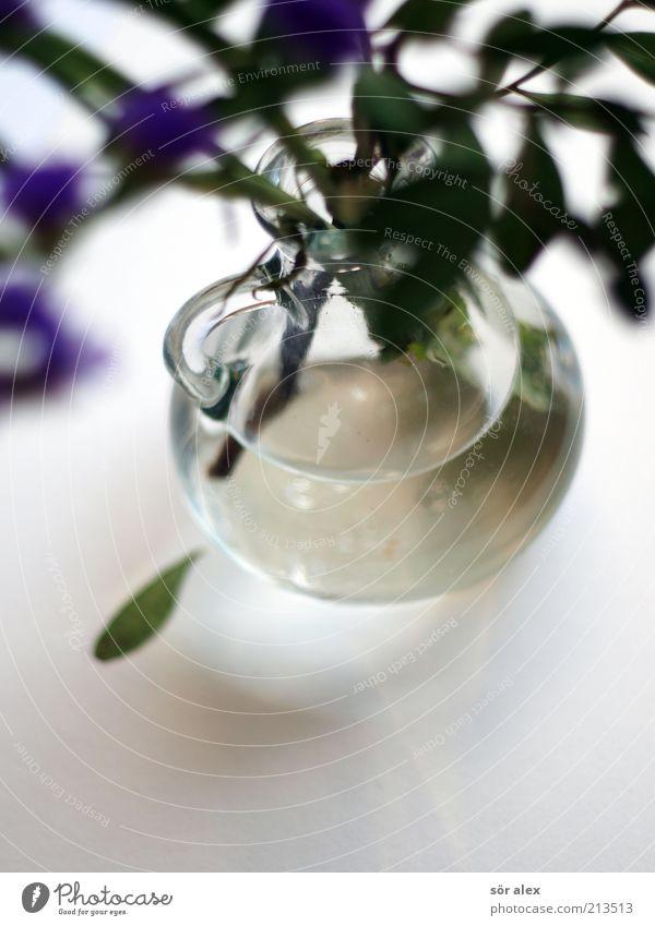 Kännchen Pflanze Blume Blüte Kannen Vase Griff Glas Blühend Duft schön Kitsch natürlich blau grün weiß Gefühle Fröhlichkeit Frühlingsgefühle Trauer Traurigkeit