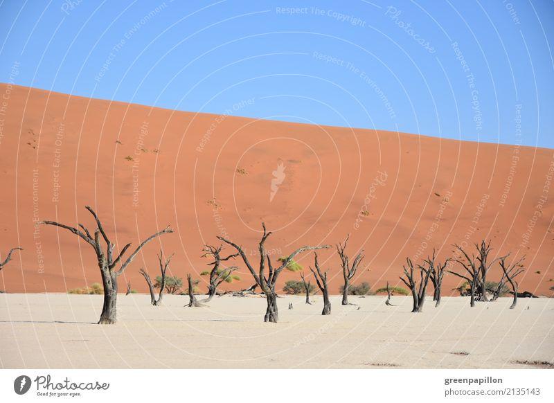 Todestal - Dead Vlei - Sossusvlei - Namibia Baum Tourismus Sand wandern Erde trist trocken Wüste Düne Skelett Totholz