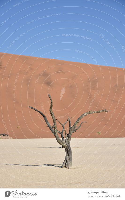 Dürre Umwelt Natur Landschaft Urelemente Erde Sand Himmel Sonne Wärme Baum Wüste Namib Namibia Ferien & Urlaub & Reisen wandern trist trocken Endzeitstimmung
