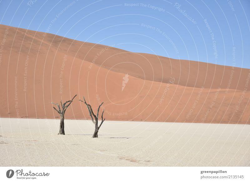 Todestal - Dead Vlei - Sossusvlei - Namibia Natur Landschaft Erde Sand Baum Wüste Düne dehydrieren wandern trist trocken blau gold rot weiß Tourismus