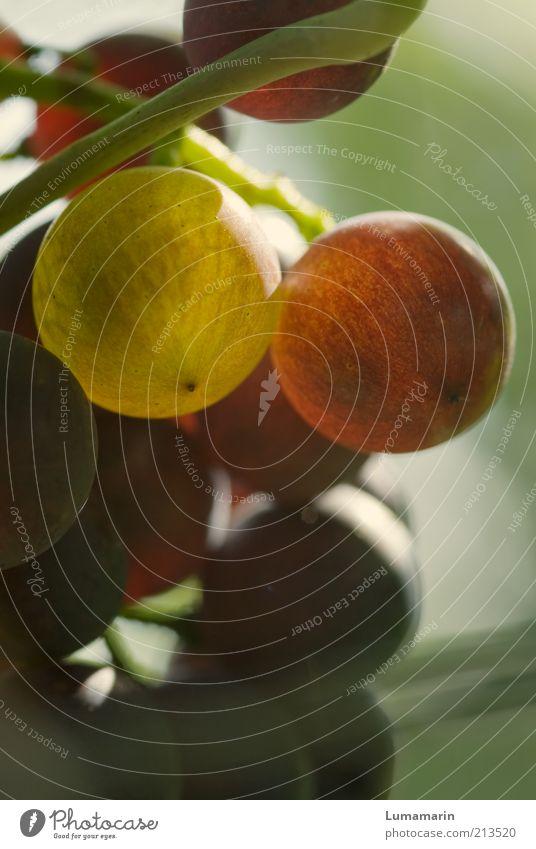 Früchtchen Natur schön grün Pflanze rot Sommer Ernährung gelb Farbe Herbst Wärme hell Gesundheit glänzend Lebensmittel Umwelt