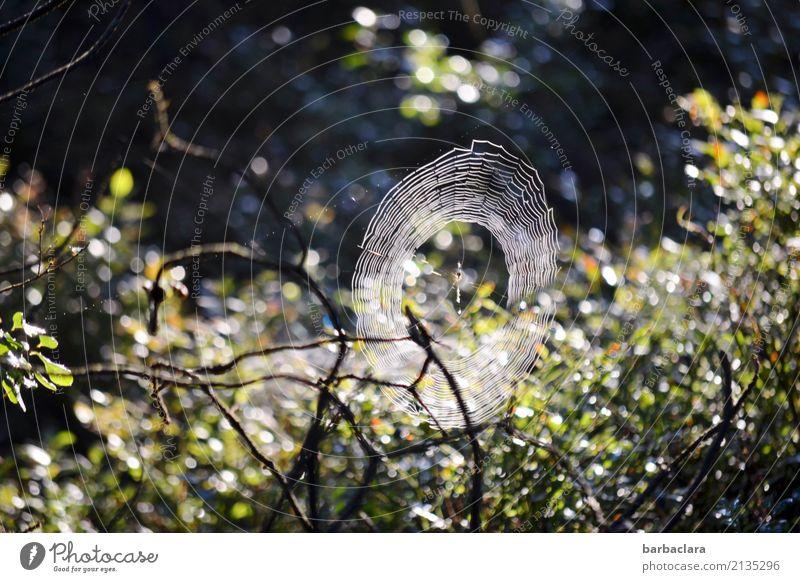 Halloween im Moor Natur Pflanze dunkel Umwelt Stimmung hell leuchten Sträucher Beginn Wassertropfen Klima Netzwerk bizarr Spinne Spinnennetz