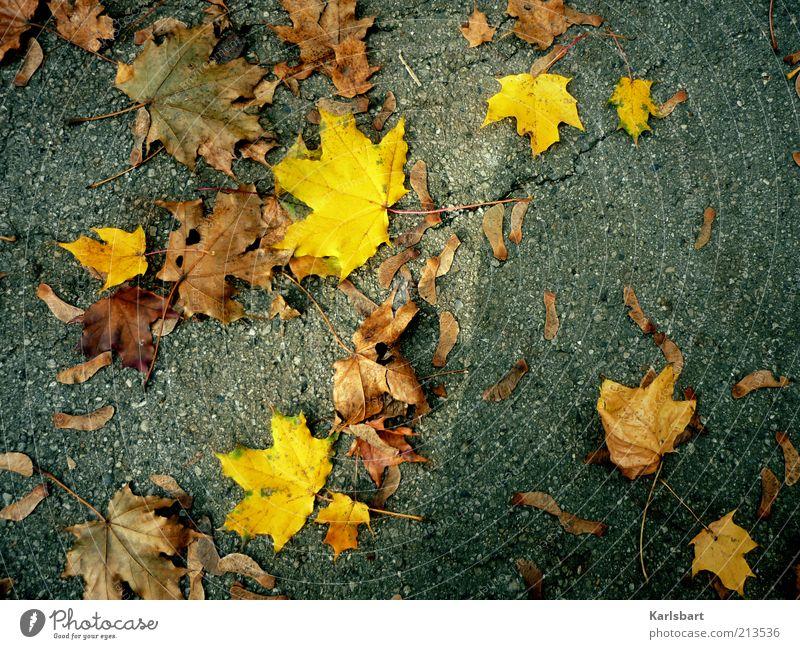 hörb. Natur Blatt gelb Straße Herbst grau Wege & Pfade braun Wetter Umwelt mehrere Boden Wandel & Veränderung Vergänglichkeit Verfall