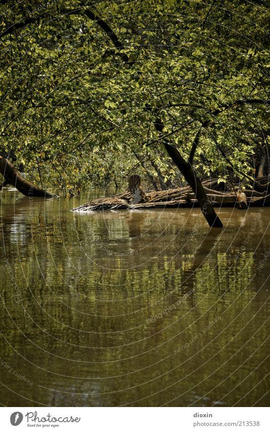 Tide Is High Umwelt Natur Landschaft Wasser Klima Klimawandel Pflanze Baum Grünpflanze Wildpflanze Ast Baumstamm Wald Flussufer Auenland Auwald Rheinauen nass