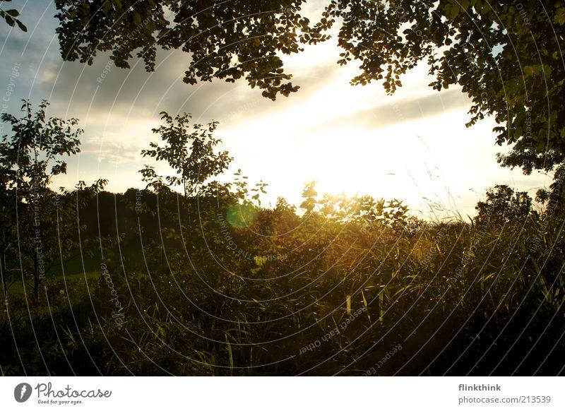 Sommerabend schön Sonne grün blau Pflanze Sommer Blatt Gras träumen Landschaft hell Unendlichkeit Natur genießen Schönes Wetter Grünpflanze