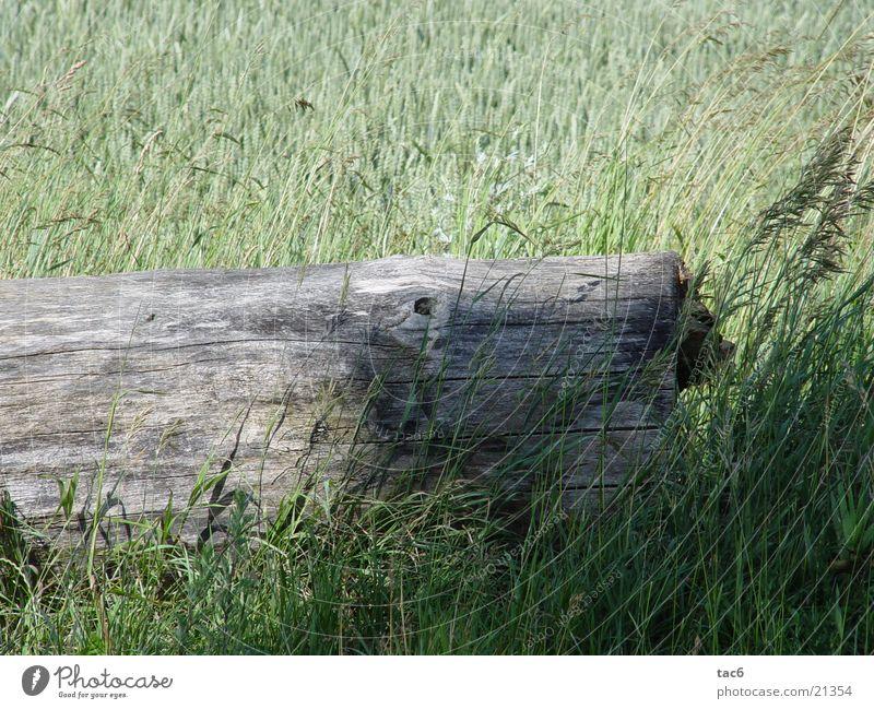 Schatten auf Holz Feld grün Baum Gras Natur alt verfallen Nahaufnahme