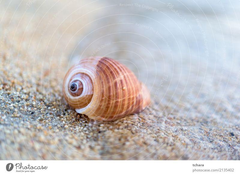 Muschel Natur Ferien & Urlaub & Reisen blau Sommer Farbe schön Meer Strand natürlich Küste Sand Design Dekoration & Verzierung Idylle Aussicht Beautyfotografie