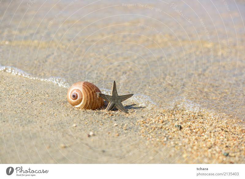 Am Strand Design exotisch schön Ferien & Urlaub & Reisen Sommer Meer Dekoration & Verzierung Tapete Natur Sand Küste natürlich blau Farbe Idylle Muschelschale