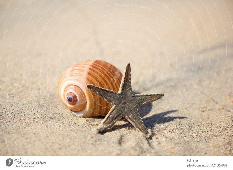 Sommerzeit Design exotisch schön Ferien & Urlaub & Reisen Strand Meer Dekoration & Verzierung Tapete Natur Sand Küste natürlich blau Farbe Idylle Muschelschale