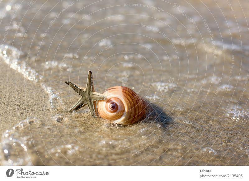 Meer Natur Ferien & Urlaub & Reisen blau Sommer Farbe schön Strand natürlich Küste Sand Design Dekoration & Verzierung Idylle Aussicht Beautyfotografie