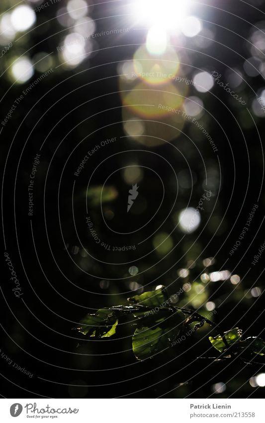 after the rain Umwelt Natur Landschaft Pflanze Urelemente Wasser Wassertropfen Sommer Klima Wetter Regen Baum Sträucher Wildpflanze genießen blenden nass dunkel