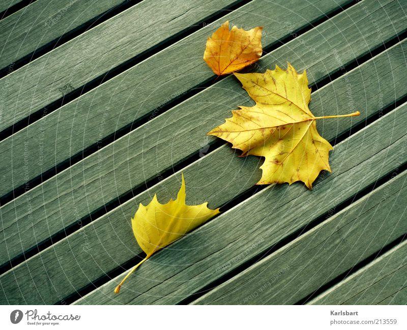falling. leaves. Natur Blatt gelb Leben Herbst Stil Holz Linie Wind Umwelt Wandel & Veränderung Vergänglichkeit Wohlgefühl Herbstlaub herbstlich