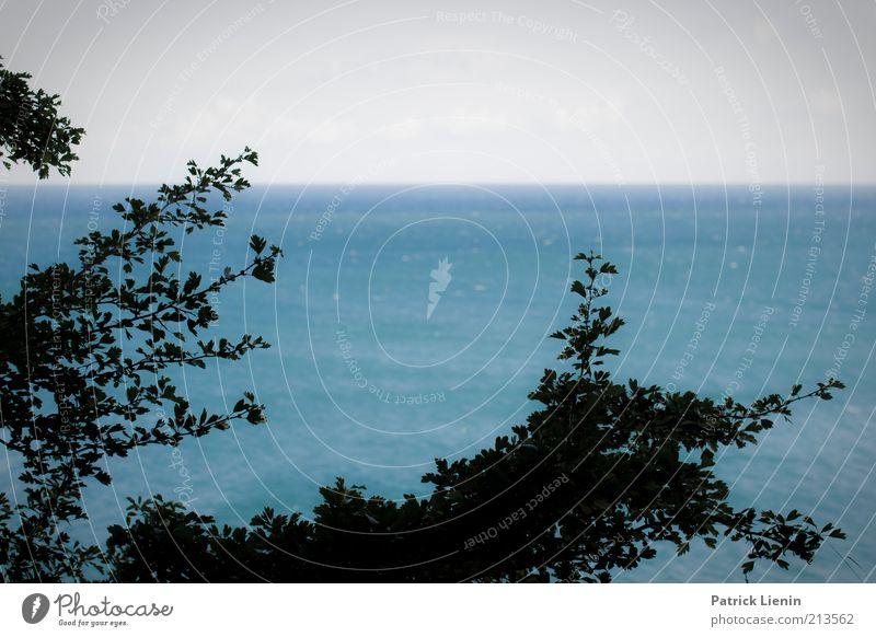 far away Umwelt Natur Landschaft Urelemente Luft Wasser Sommer Klima Wetter Wind Pflanze Baum Sträucher Wellen Küste Ostsee Meer Insel Blick Stimmung Glück