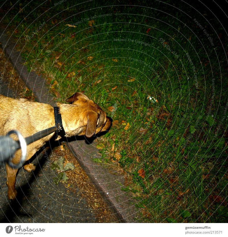 was riecht denn hier so gut.... grün schwarz Tier Leben Wiese Gras Hund braun Kraft nass Beton niedlich Neugier beobachten Fell unten