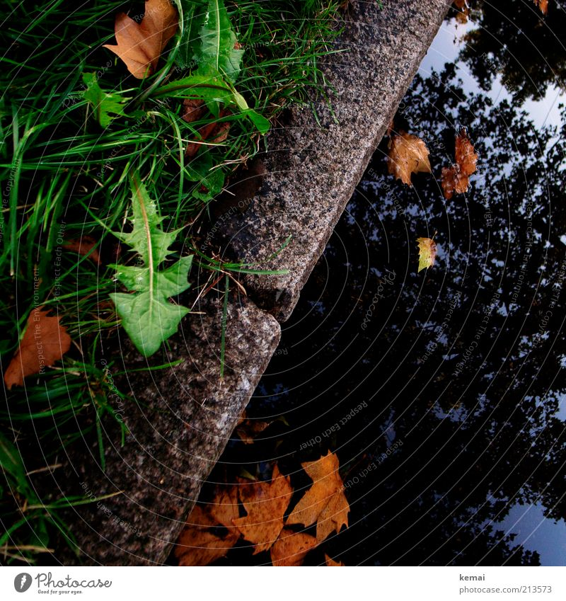 Unkraut vergeht nicht Natur Wasser Himmel Baum grün Pflanze Blatt Straße kalt Herbst Gras Regen braun Wetter Umwelt nass
