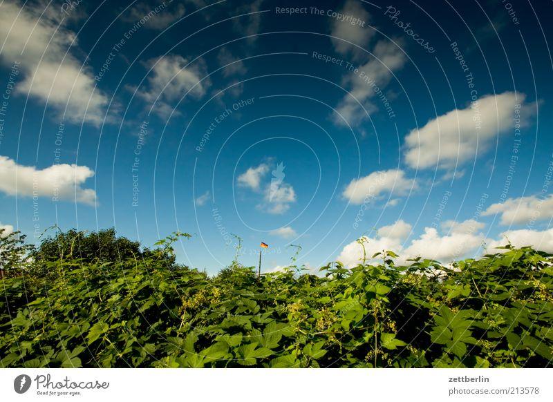 Himmel, Hecke, Deutschlandfahne Garten Umwelt Natur Wolken Sommer Klima Klimawandel Frühlingsgefühle Hoffnung August Fahne Deutsche Flagge