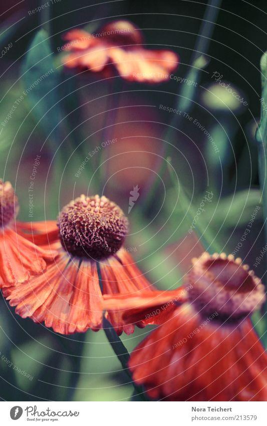 Blumentanz Natur schön grün Pflanze rot Gefühle Glück Stimmung Kunst Design Umwelt frei ästhetisch Wachstum wild