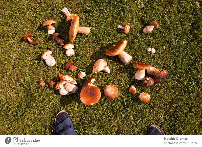 Fußpilz Umwelt Natur Pflanze Sommer Gras Pilz Schlappen Sandale Wiese Steinpilze Hallimasch Sammlung Anhäufung Sammler Sammlerstück Farbfoto Außenaufnahme Tag