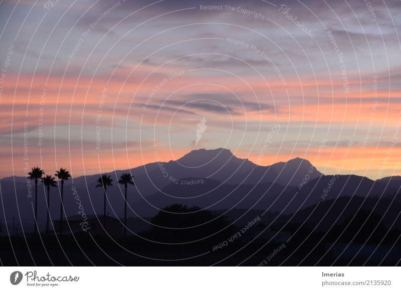 Shades of Mallorca Natur Landschaft Himmel Wolken Horizont Sonnenaufgang Sonnenuntergang Sommer Palme Feld Berge u. Gebirge Wolkenformation Wolkenschleier Dorf