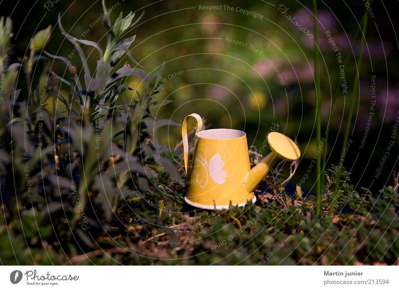 Gießkännchen Freizeit & Hobby Garten Umwelt Natur Pflanze Sommer Blume Gras Sträucher Moos Blatt Grünpflanze Nutzpflanze Wildpflanze Park klein lustig natürlich