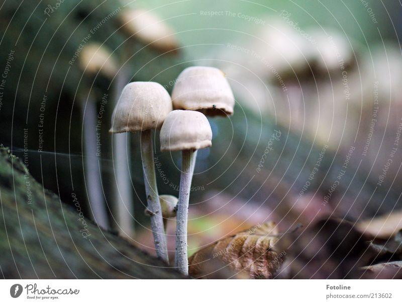 Pilzversammlung Natur Pflanze Wald Herbst hell Umwelt Erde Wachstum stehen natürlich Urelemente Waldboden Pilzhut