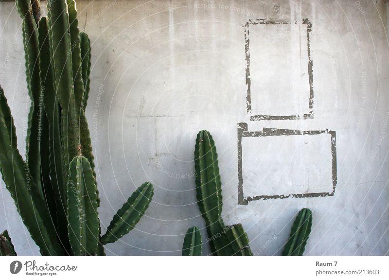 ein beschnittener Cactus und zwei Rahmen grün blau Pflanze Ferien & Urlaub & Reisen Haus Wand grau Mauer Gebäude Linie Beton Fassade Häusliches Leben Zeichen