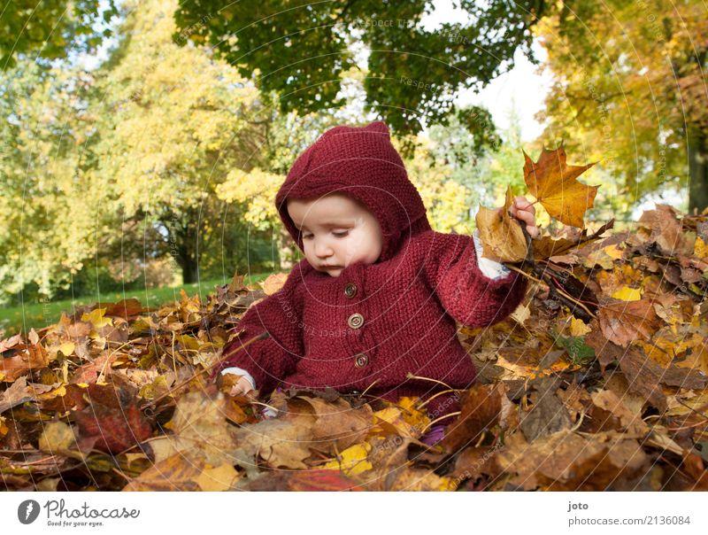 Spaß im Laubhaufen Kind Natur Blatt Leben Herbst Spielen Glück Garten Ausflug Zufriedenheit Park Kindheit sitzen Baby lernen niedlich