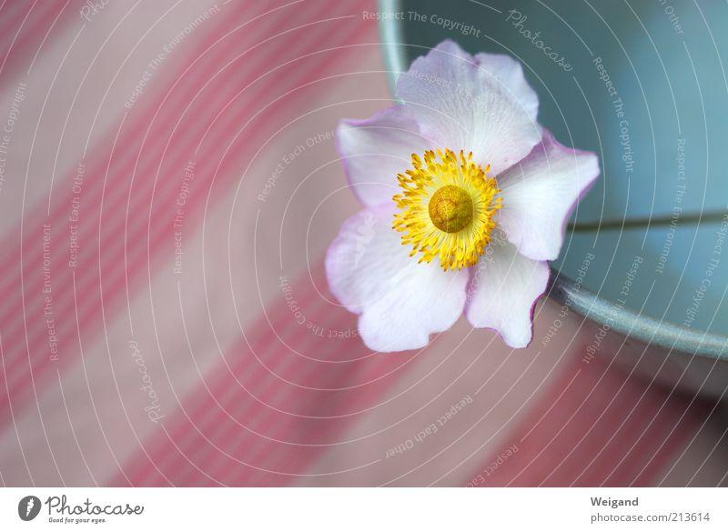 Blütenstreifen Schalen & Schüsseln Umwelt Blume Streifen ruhig Gelassenheit Landleben Idylle gelb Farbfoto Außenaufnahme Textfreiraum links Tag
