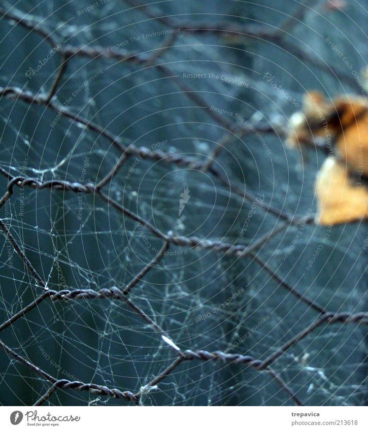 Netz Spinne bauen blau grau grün Gefühle Schutz Angst kalt Kontrolle Stress Unschärfe