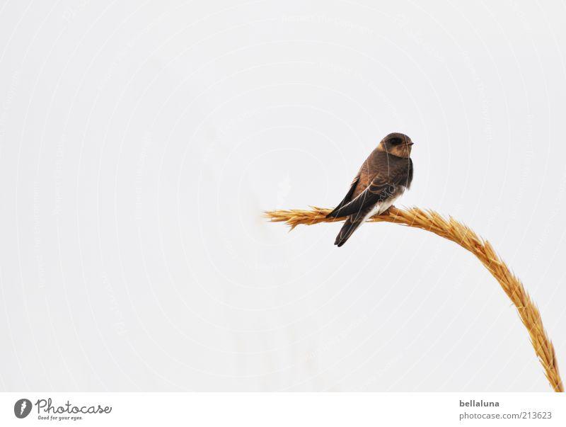 Auszeit Natur Himmel Meer Pflanze Sommer Strand Tier Freiheit Vogel Küste Wetter Umwelt sitzen Flügel Wildtier Ostsee