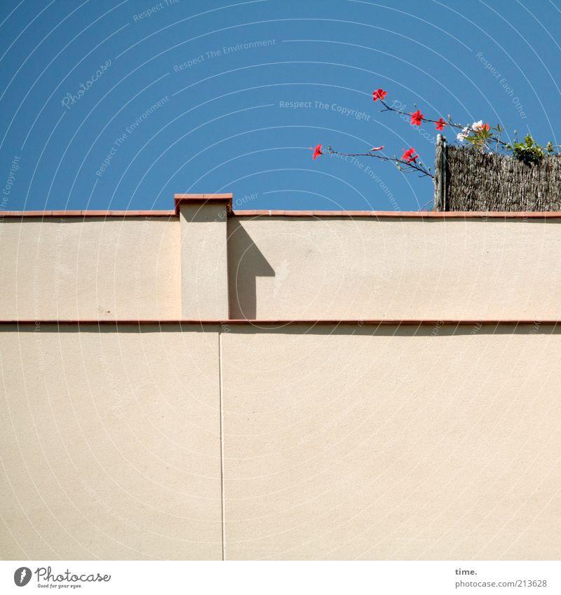 Fluchtversuch Himmel Blume Pflanze Sommer Haus Wand oben Blüte Garten Mauer hell Fassade trist Richtung Schönes Wetter Putz