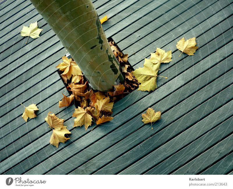 stars. stripes. Natur Baum Blatt Leben Herbst Holz Wege & Pfade Linie Umwelt Lifestyle Boden Wandel & Veränderung Vergänglichkeit Streifen Baumstamm