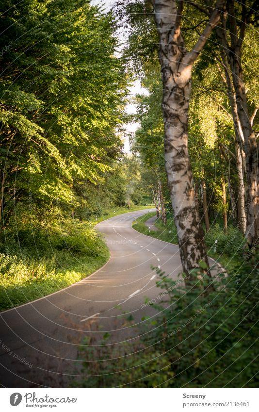 Mit Schwung... Natur Landschaft Pflanze Sonne Sonnenlicht Sommer Schönes Wetter Verkehr Verkehrswege Straßenverkehr Autofahren Wege & Pfade Landstraße grün