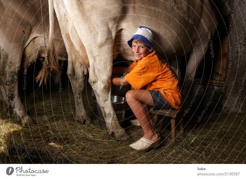 Frischmilchproduktion Tier Junge Lächeln Landwirtschaft Arbeitsplatz Kuh Forstwirtschaft Käse Milch Stall melken Milcherzeugnisse Bregenzerwald