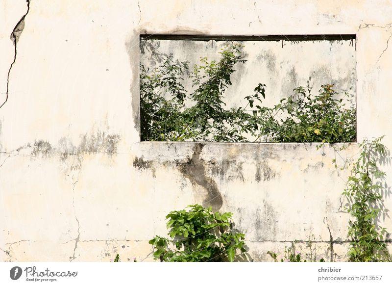 Vielleicht sollte... alt weiß grün Pflanze Blatt Haus Wand Fenster grau Mauer Beton Wachstum kaputt Ende Vergänglichkeit Verfall