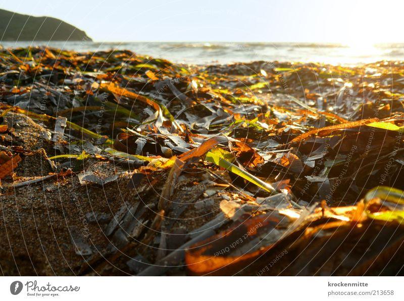 Bunt sind schon die Strände Natur Landschaft Pflanze Wasser Horizont Sonne Sonnenaufgang Sonnenuntergang Sonnenlicht Sommer Sträucher Blatt Grünpflanze Wellen