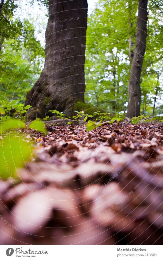 Wald Natur Baum grün Sommer Blatt gelb Herbst grau braun Umwelt ästhetisch weich Klima wild Baumstamm