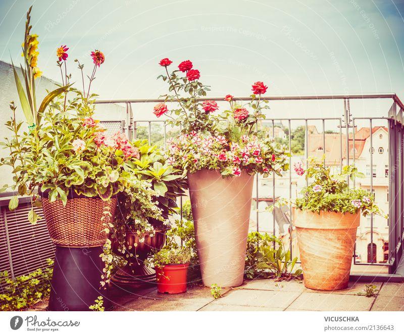 Blumentöpfe auf Terrasse oder Balkon Lifestyle Stil Design Sommer Häusliches Leben Wohnung Garten Innenarchitektur Natur Herbst Pflanze Topfpflanze Stadt