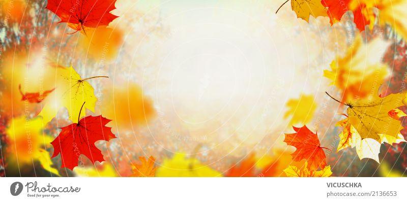 Herbst Hintergrund mit fliegenden Baumblätter Natur Pflanze Schönes Wetter Blatt Garten Park Fahne gelb Design Hintergrundbild November September Oktober