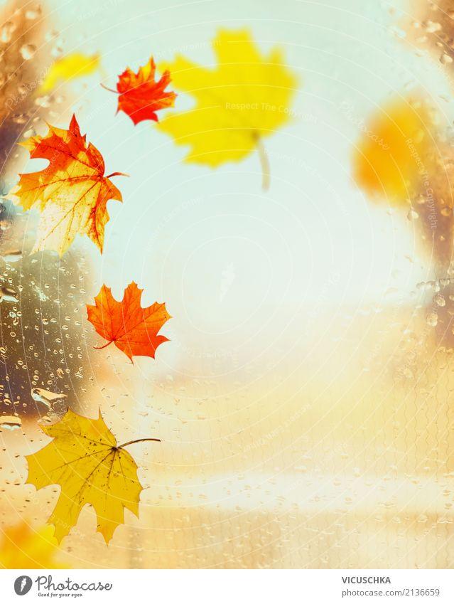 Bunte Herbst Blätter auf Fenster mit Regentropfen Lifestyle Design Garten Natur Blatt Park gelb Hintergrundbild September Oktober November Sonnenlicht