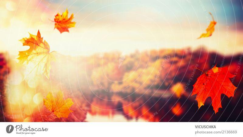 Herbst Hintergrund mit fallenden Blätter und Stadtpark Lifestyle Natur Landschaft Himmel Sonnenaufgang Sonnenuntergang Sonnenlicht Schönes Wetter Blume Blatt