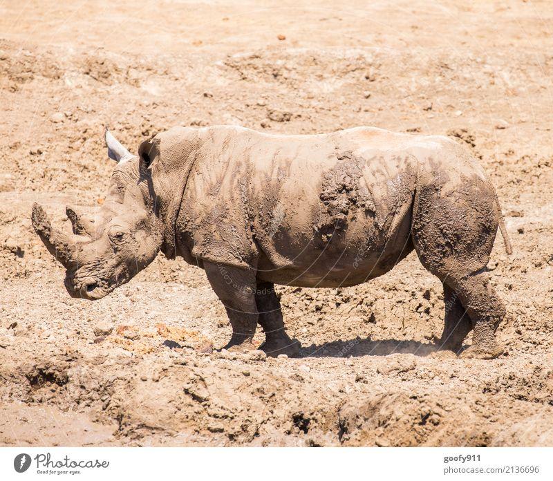 Nach dem Schlammbad;-))) Natur Ferien & Urlaub & Reisen Landschaft Tier Wärme Umwelt Sand Ausflug wild Erde dreckig Wildtier stehen Abenteuer groß Wüste