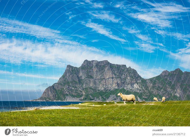 Utakleiv Beach auf den Lofoten in Norwegen Erholung Ferien & Urlaub & Reisen Strand Meer Berge u. Gebirge Natur Landschaft Wasser Wolken Gras Wiese Felsen