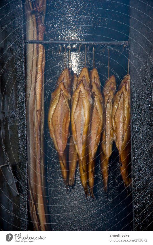 Forelle im Buchenrauch Lebensmittel Fisch Ernährung Räucherforelle Aal Räucheraal Räucherofen Tier Nutztier Wildtier Totes Tier hängen heiß lecker braun gold