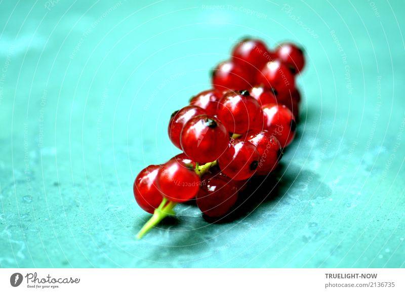 Vitaminschock! Natur Farbe rot Freude Gesundheit natürlich Lebensmittel Frucht glänzend Ernährung frisch genießen Fröhlichkeit süß Lebensfreude rein