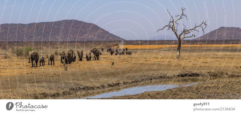 Wandertag Ferien & Urlaub & Reisen Ausflug Abenteuer Freiheit Safari Expedition Umwelt Natur Landschaft Erde Sand Schönes Wetter Wärme Dürre Baum Hügel Wüste